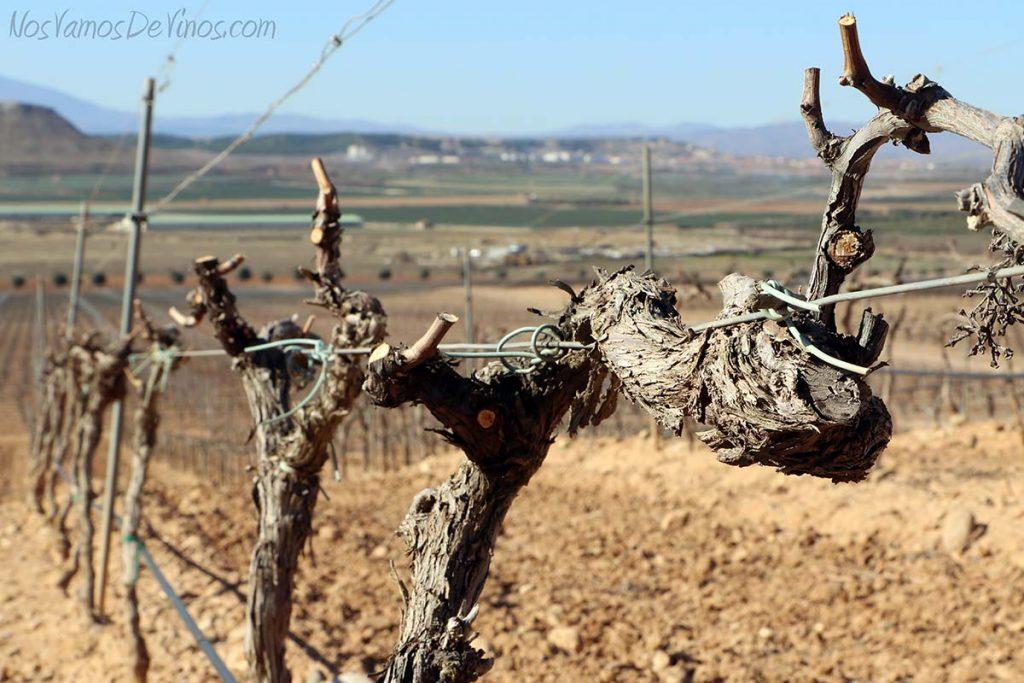 Pago-de-Cirsus-viñas-cepas