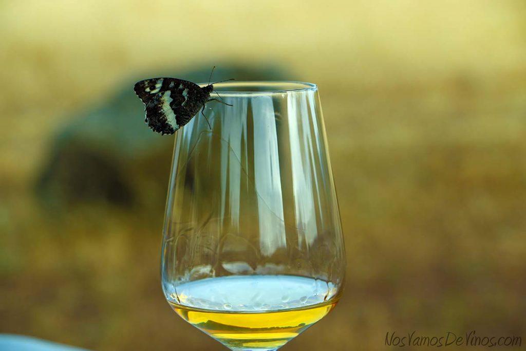 Mariposa en el borde de la copa de vino Hoyanko Áurea.