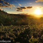 Atardecer en el viñedo de Vinos LOF en Villalibre de la Jurisdicción
