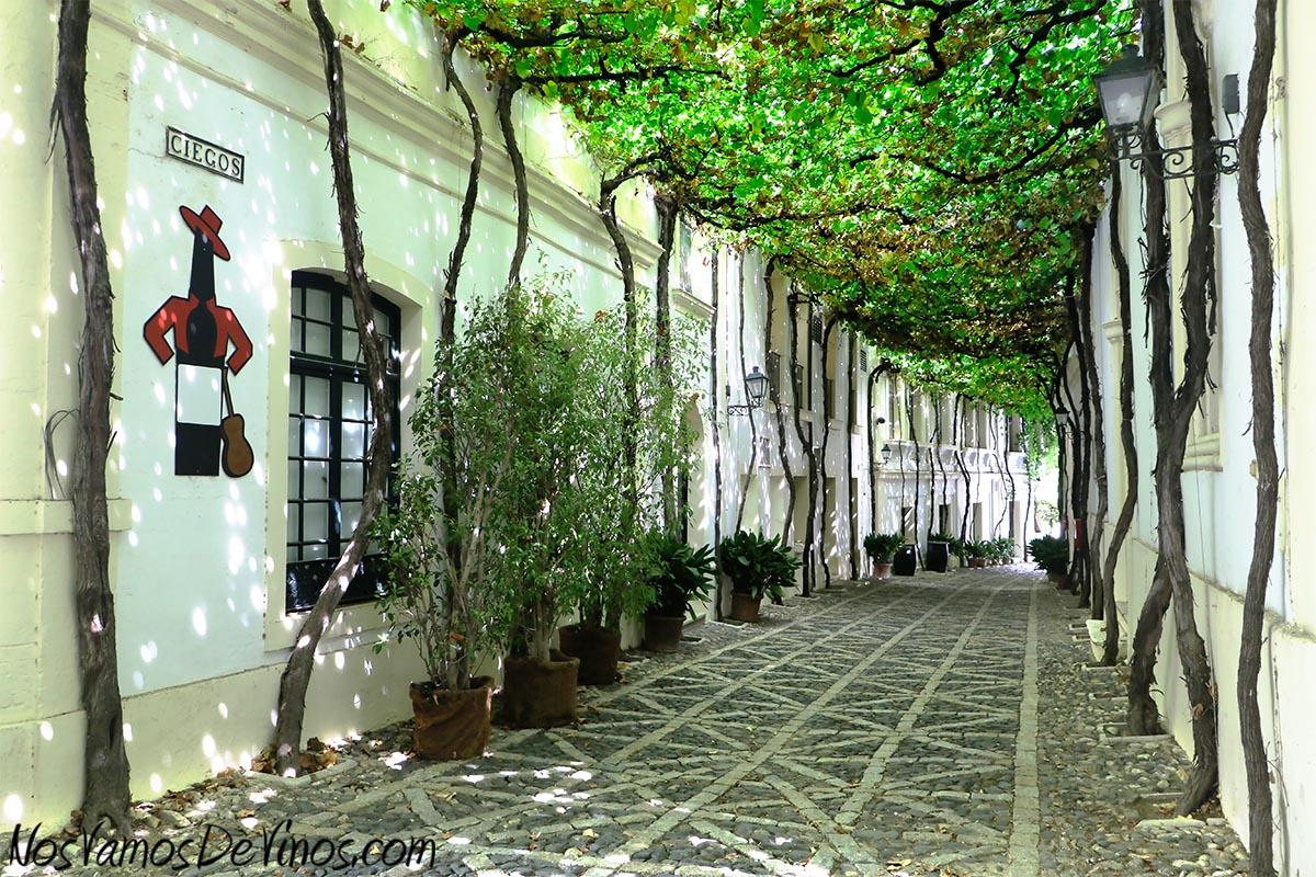 La calle Ciegos, originariamente parte de la ciudad de Jerez y hoy absorbida por el complejo bodeguero de González Byass, parece que debe su nombre a un asilo para invidentes documentado en 1589. Integralmente cubierta por un emparrado, su belleza es indiscutible.