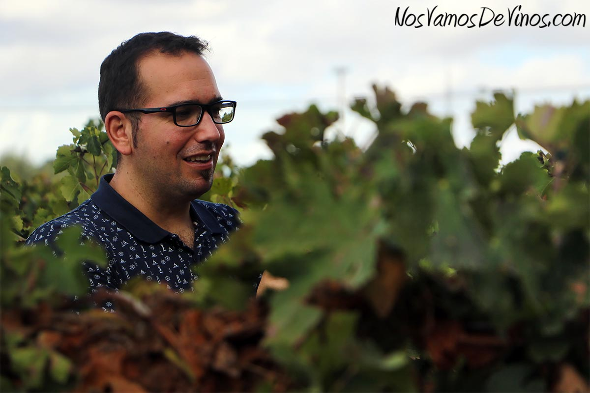 Alejandro Narvaez en el viñedo de Forlong.