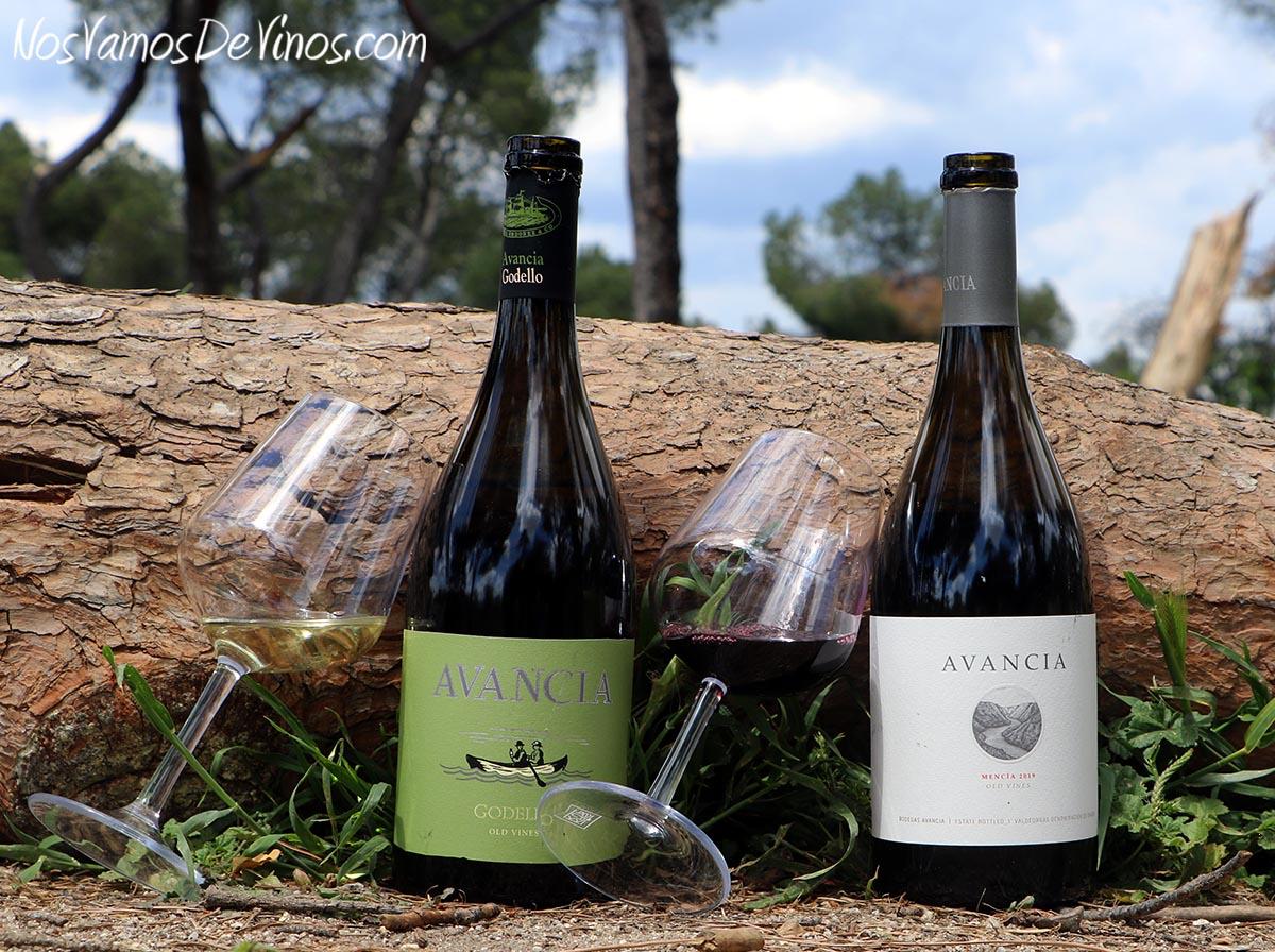 Avancia Godello Old Vines 2019 & Mencía Old Vines 2019