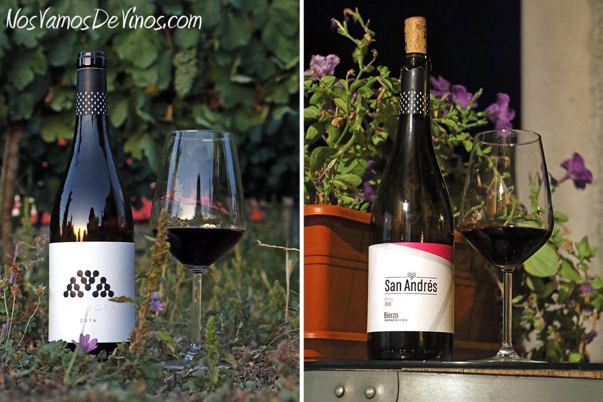 Visita al viñedo de Bodega Feo y cata de nuevas añadas. Cata de Metáfora 2016 y Cruz de San Andrés 2018.