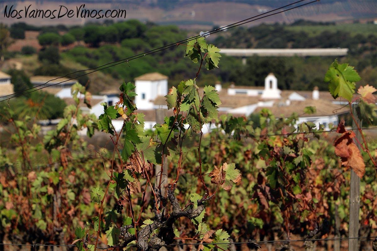 Cortijo los Aguilares desde el viñedo La Encina.